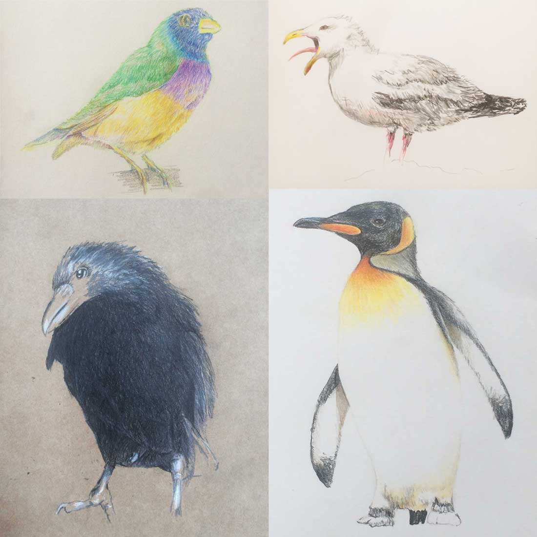 four drawings: a finch; a seagull; a crow; and a penguin